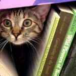 Looking for books by Ann Arbor Authors